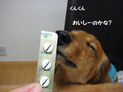 小型犬に錠剤飲ませるの結構大変。