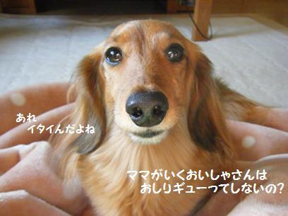 イヌだから普通だけど、人間が肛門腺絞ってもらうと想像すると・・・恐ろしく恥ずかしいやないか!!