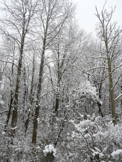 雪2・10
