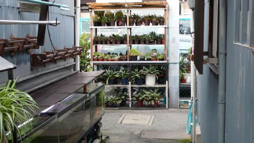 路地植物園2