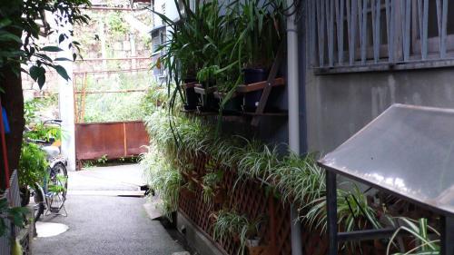 路地植物園3