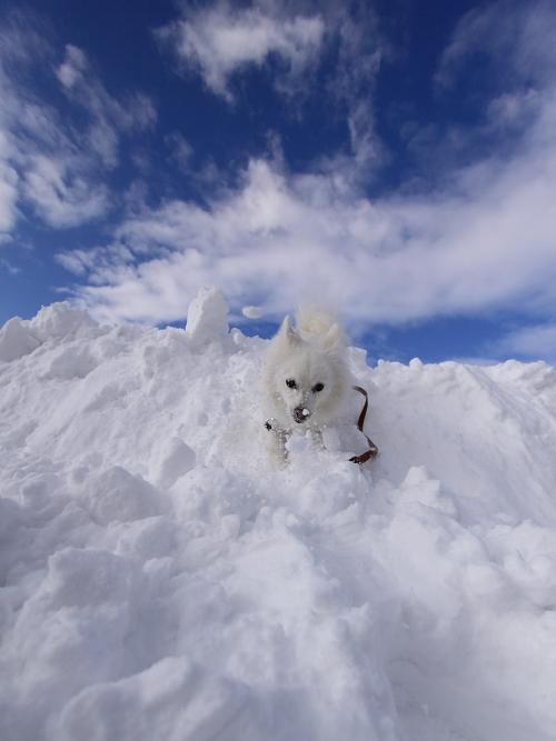 雪山下ります!