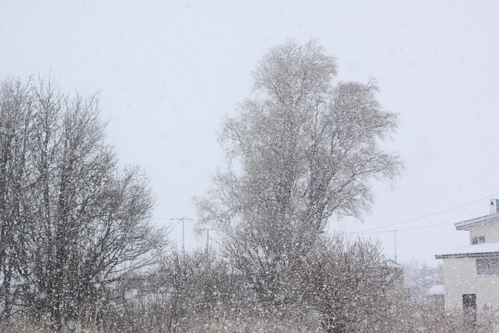 しんしんと雪が降る。。。