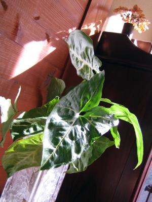 IMG_6483観葉植物