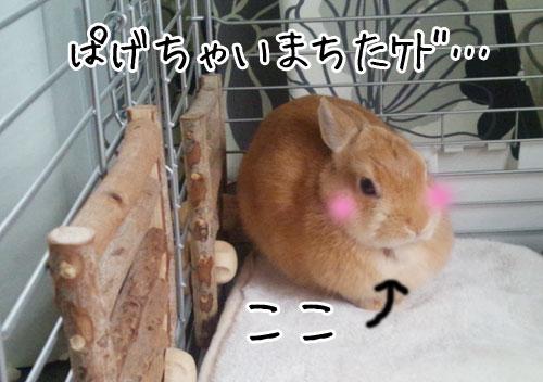 ぱげ^^;