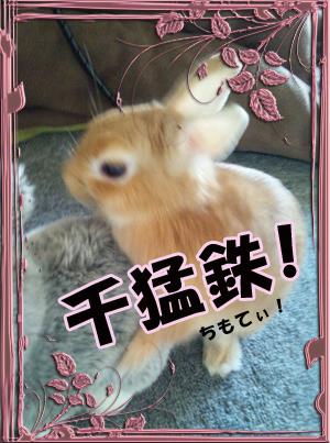 ちもてぃ!!