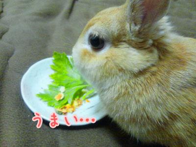 お野菜解禁w