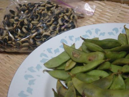 鞍掛豆の生豆と枝豆