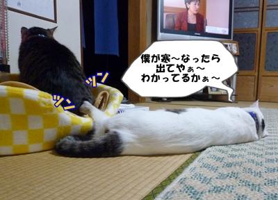 11_20111123190120.jpg