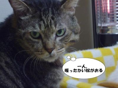 3_20111123185633.jpg
