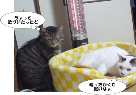 4_20111123185632.jpg