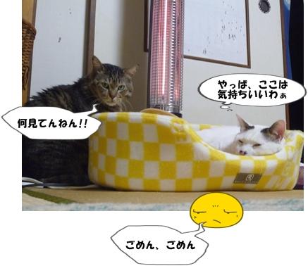 5_20111123185632.jpg