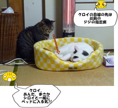 6_20111123185632.jpg