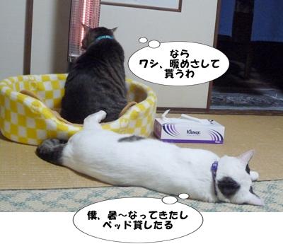 9_20111123190121.jpg