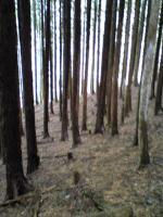 赤星山の森林2