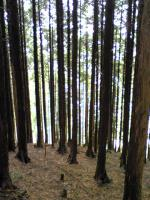 赤星山の森林1