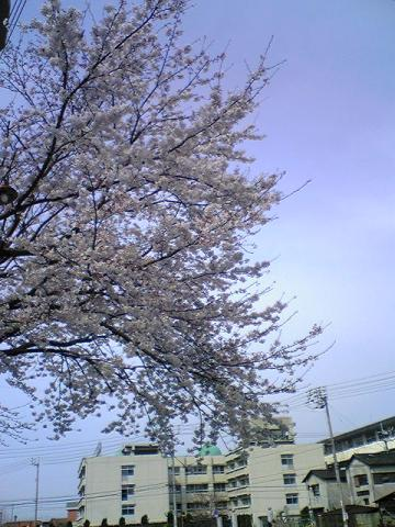 moblog_4e3439eb.jpg