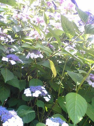 moblog_8cdb0647.jpg