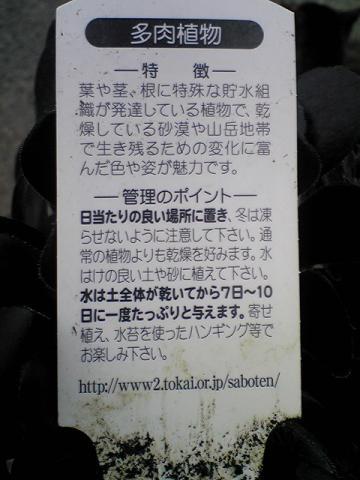 moblog_a0789665.jpg