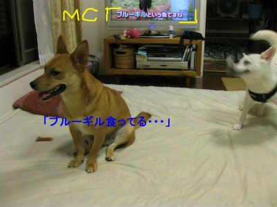 20110801_0205.jpg