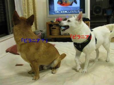 20110801_0207.jpg