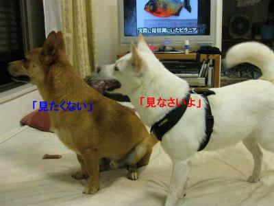 20110801_0208.jpg