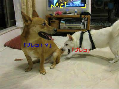 20110801_0209.jpg
