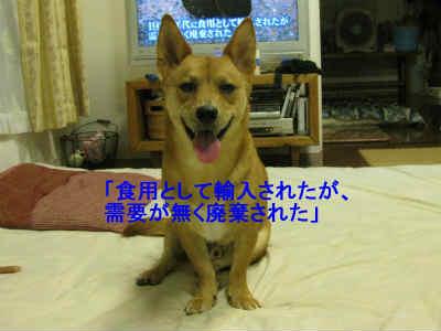 20110801_0223.jpg