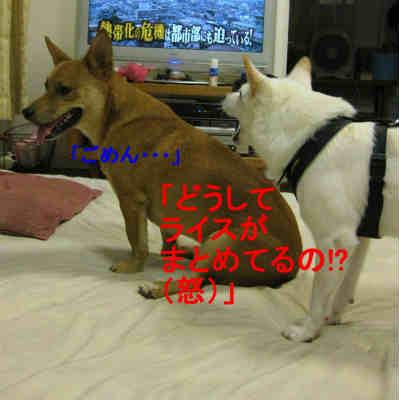 20110801_0226.jpg