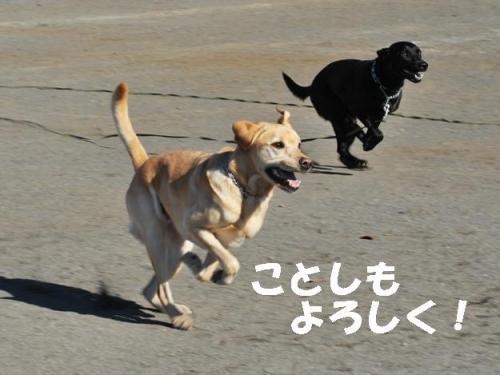 コピー ~ DSC_0153