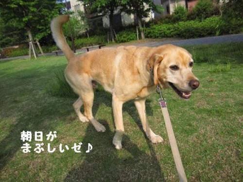 IMG_3307_20110521210016.jpg