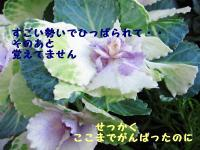 IMG_9159.jpg