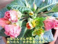 IMG_9161.jpg