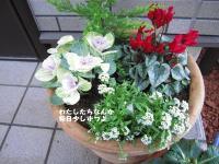 IMG_9164.jpg