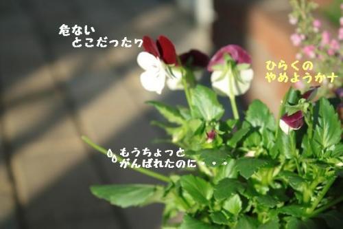 IMG_9804.jpg