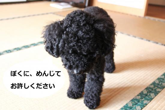 02_convert_20120527233904.jpg