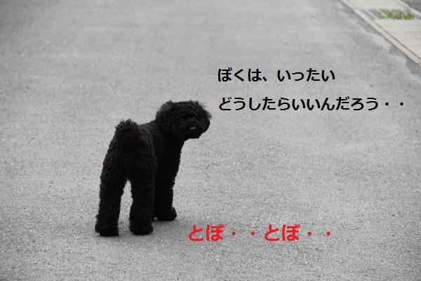 04_20120717003815.jpg