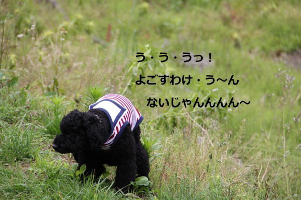 04_convert_20120630003226.jpg