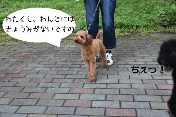 05_convert_20120511232118.jpg