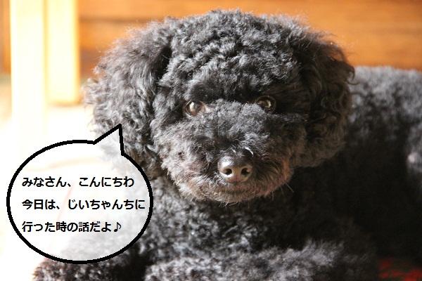 06_20120925224447.jpg