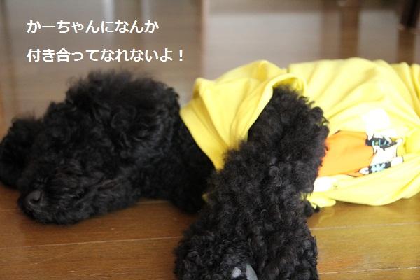 15_20120830000947.jpg