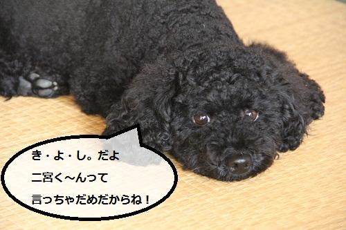 17_20120925224940.jpg