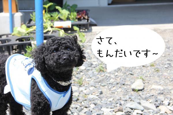 20_convert_20120524234447.jpg