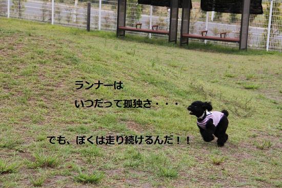 24_20120912194602.jpg