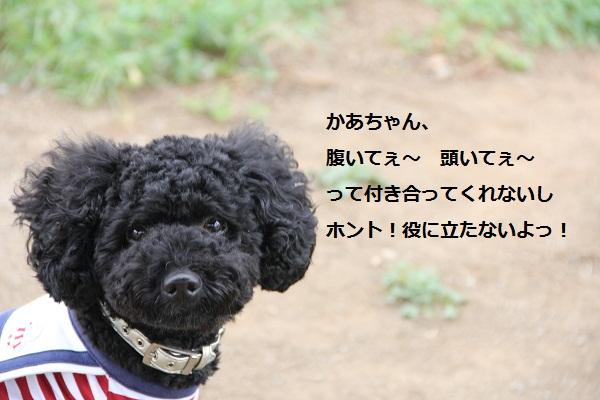 25_20120912194149.jpg