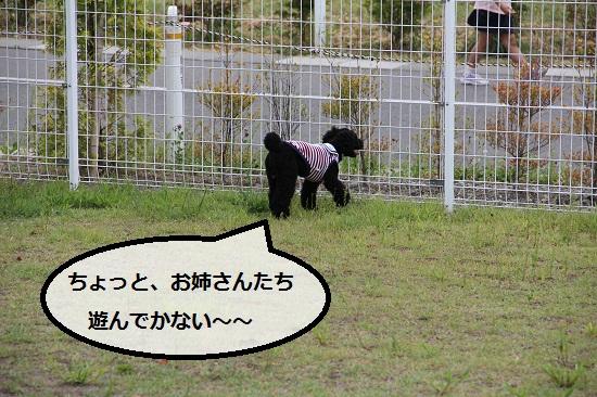 26_20120912194456.jpg