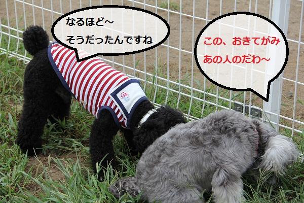 31_20120913230456.jpg