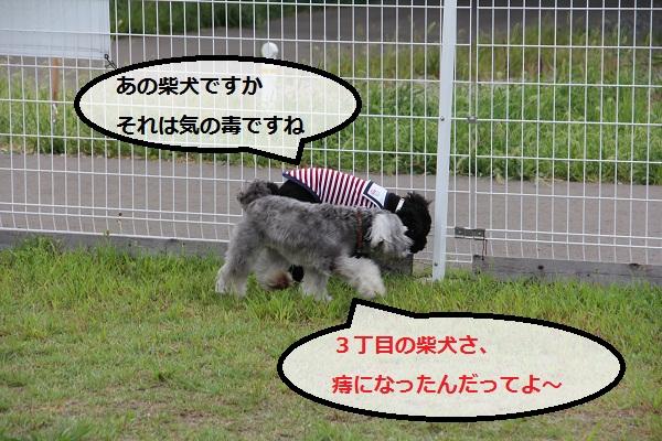32_20120913230521.jpg