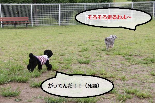 33_20120913230544.jpg