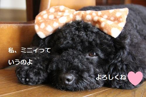 35_20120807225757.jpg